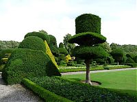 TopRq.com search results: garden topiary plant art