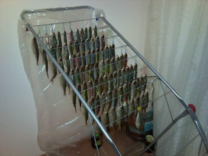 Как сушить рыбу в домашних условиях летом без мух 518