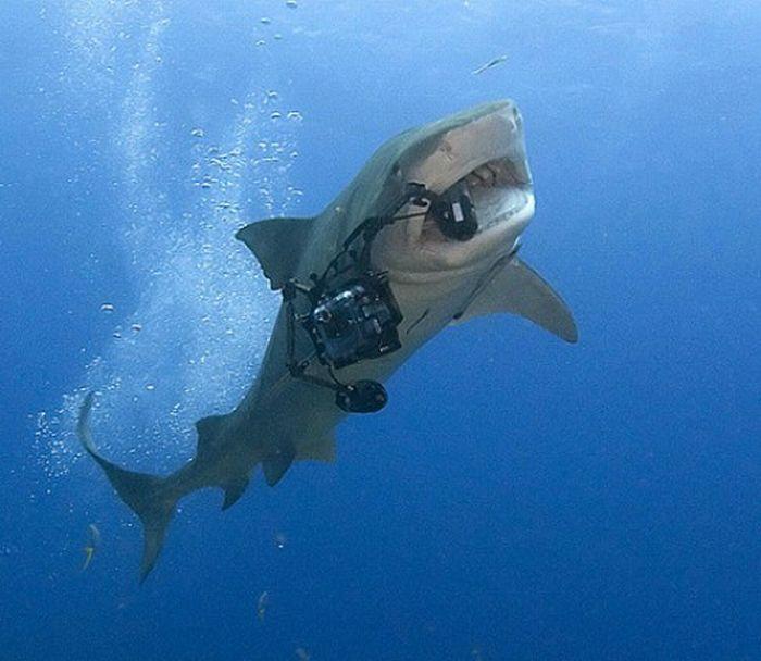 Картинки приколы про акул, поздравление днем рождения