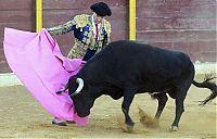 TopRq.com search results: Frank Evans, 67-year-old Matador