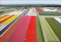 TopRq.com search results: Tulip fields, Keukenhof, The Netherlands