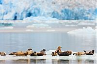 TopRq.com search results: Alaska, United States by Ray Bulson