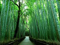 TopRq.com search results: Sagano bamboo forest, Arashiyama (嵐山, Storm Mountain), Kyoto, Japan
