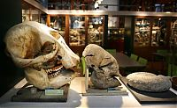 TopRq.com search results: Grant Museum of Zoology and Comparative Anatomy, University College London, England, United Kingdom