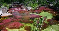 TopRq.com search results: Caño Cristales, The River of Five Colors, Serrania de la Macarena, Meta, Colombia