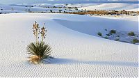 TopRq.com search results: White Sands National Monument, New Mexico, United States