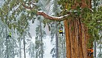 TopRq.com search results: President tree, Giant Forest, Sequoia National Park, Visalia, California, United States