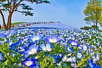 TopRq.com search results: Hitachi Seaside Park, Hitachinaka, Ibaraki, Japan
