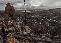 TopRq.com search results: Tasmania island fire, Commonwealth of Australia, South Pacific Ocean