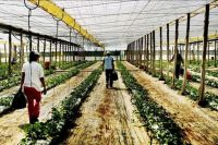 TopRq.com search results: Greenhouse structures, Almería, Andalucía, Spain