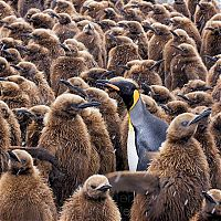 TopRq.com search results: National Geographic Photography