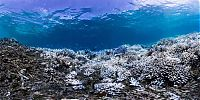 TopRq.com search results: Coral reefs, Okinawa Islands, Japan